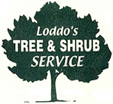 Loddo tree & shrub_011313